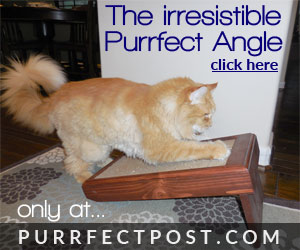 The irresistible Purrfect Angle at PurrfectPost.com